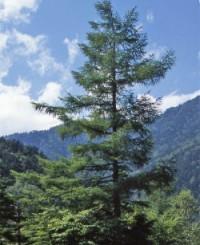 Полезные свойства древесины